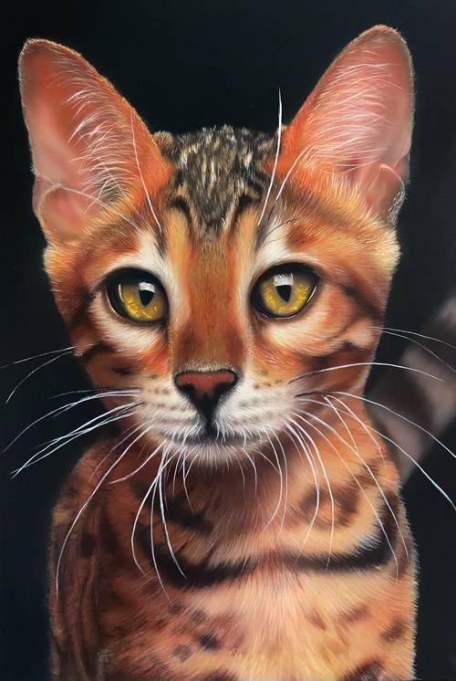 Portrait of a cat-pet