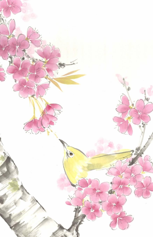 Japanese White-eye in cherry blossom