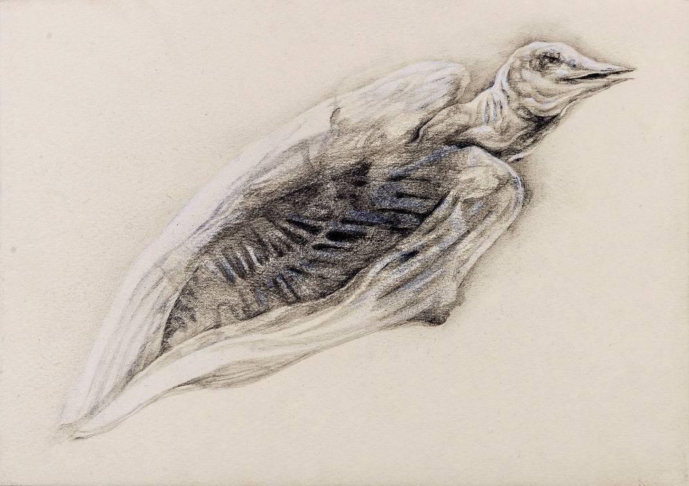 The Dead Body Of A Bird