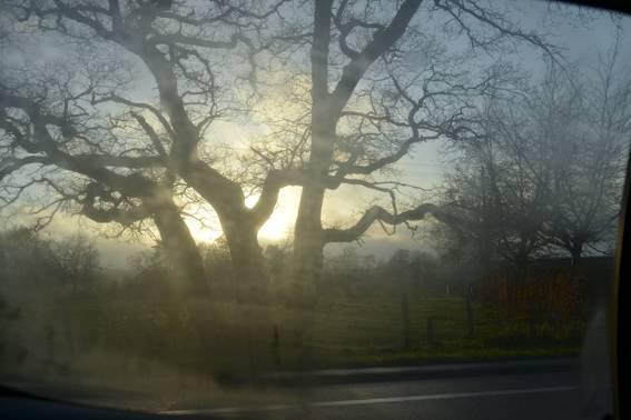 Car window, trees and light.