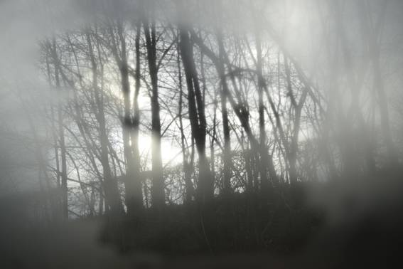 Train window, forest あなたの作品が壁にかかっているイメージ