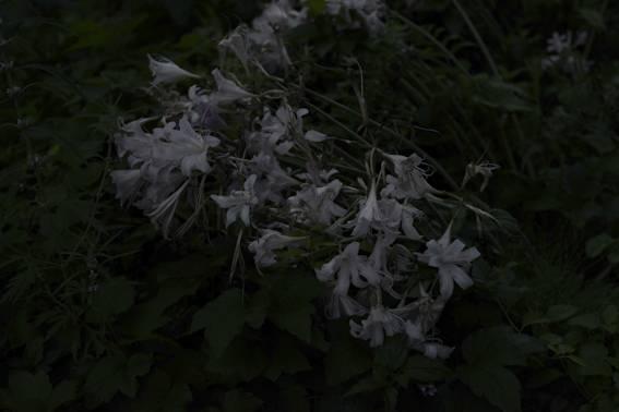 Mountain Yuri