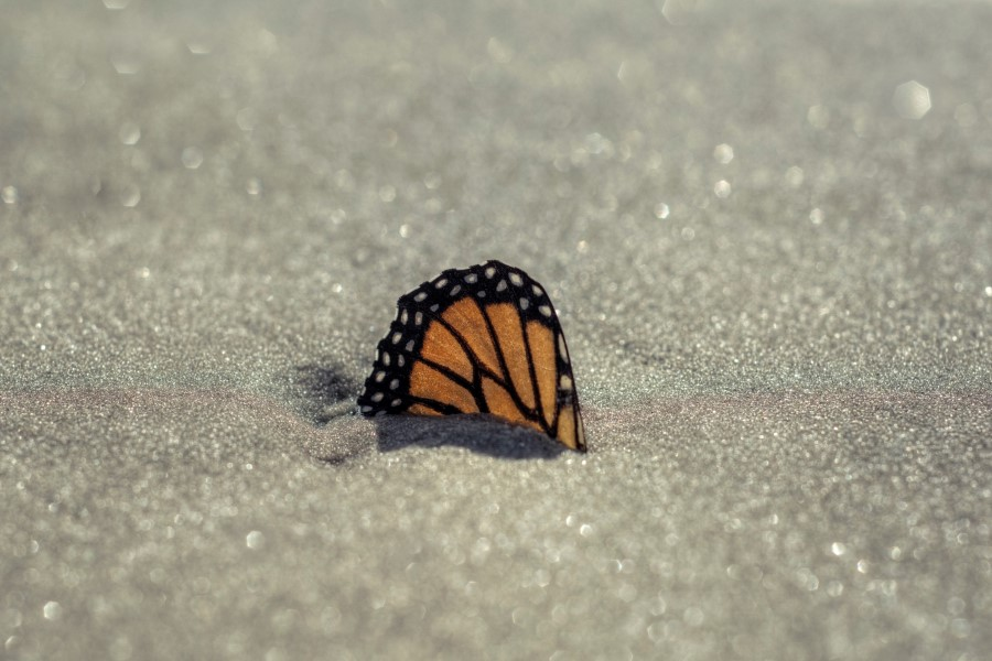 Butterfly Wing in Sand