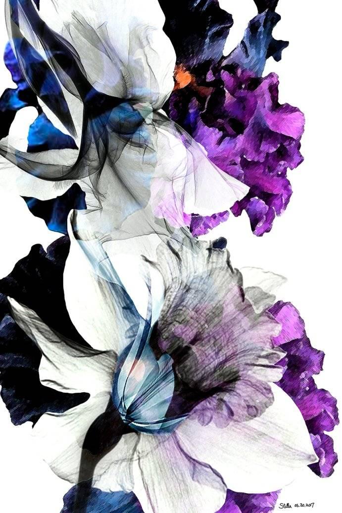 Blask Iris Fancy