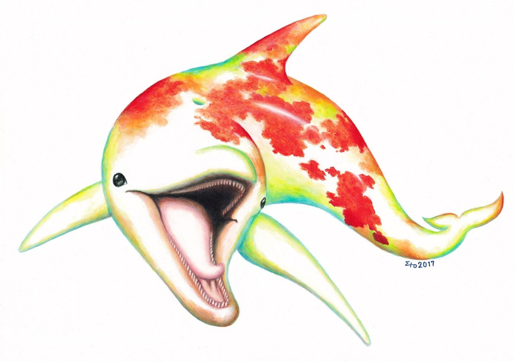 Moth Dolphin