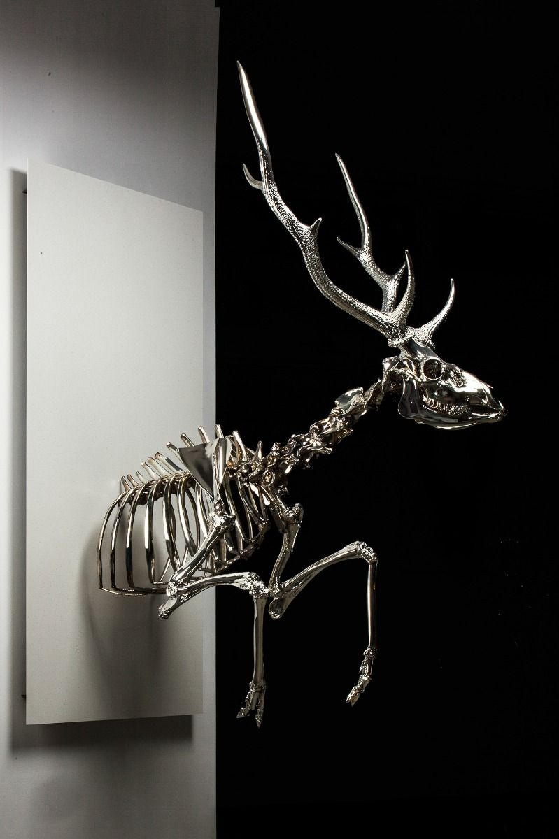 Reflection_Cervus bust