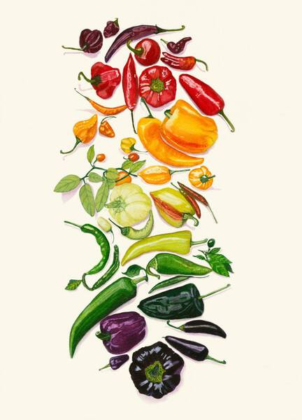 Rainbow of Peppers