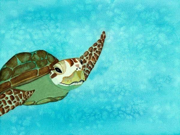 Caribbean Dream Sea Turtle