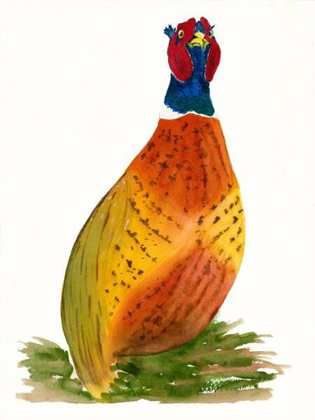 Whimsical Ring-Neck Pheasant