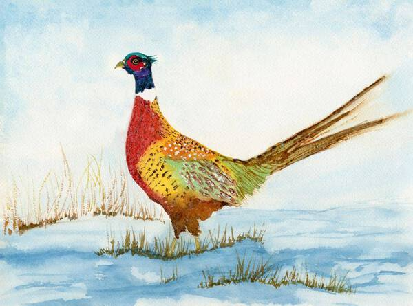 Ring-Neck Pheasant In The Snow