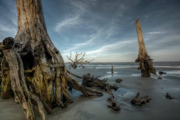Jekyll Island #3