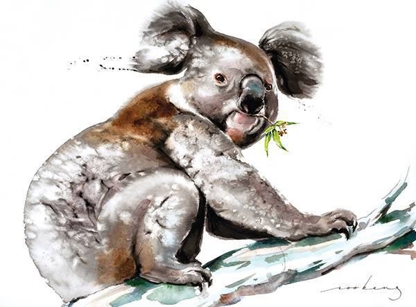 Koala Munch