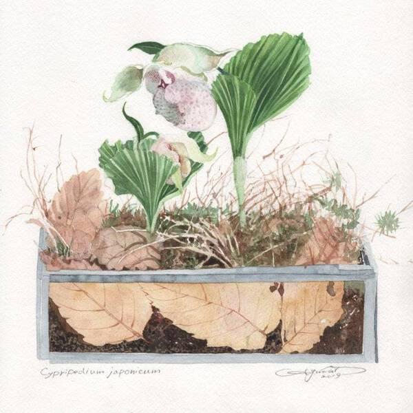 Veronicastrum sibiricum (plant)