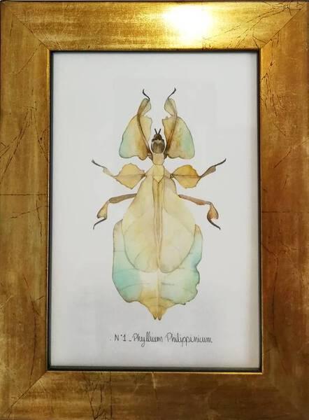 N°1 - Phyllium Philippinicum