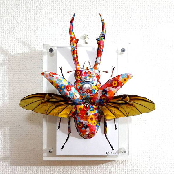 Flowery stag beetle spreads its wings ED:4/10