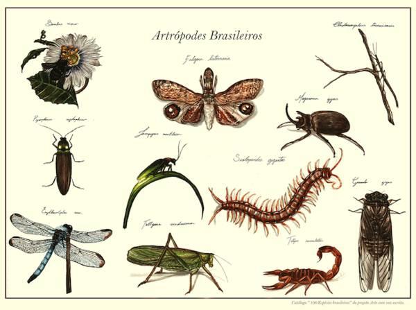 Board 8 - Brazilian Arthropods