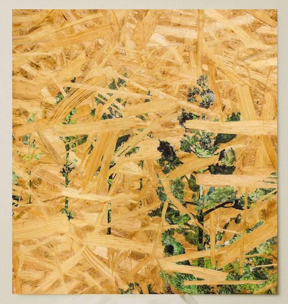 OSBの木々/ OSB woods <Red pine 2>