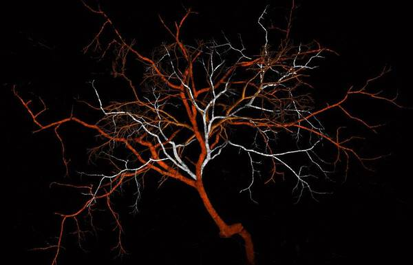 CRISPR Tree