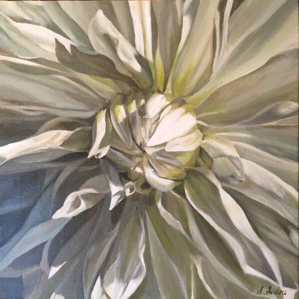 Dahlia white1