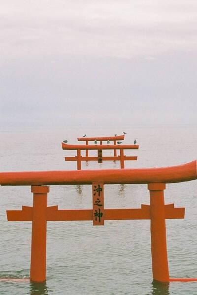 Floating Torii Gate