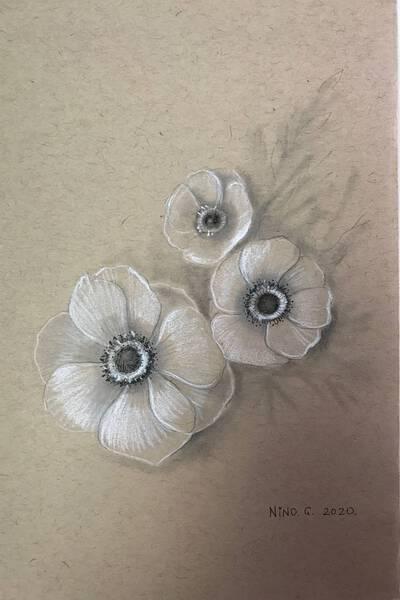 black eyed Anemones