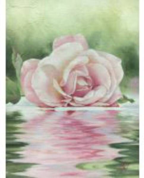 Waterside rose