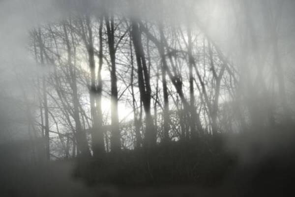 Train window, forest