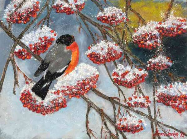 Rowanberries in the snow