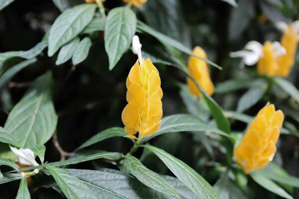 A piece of Tangerine