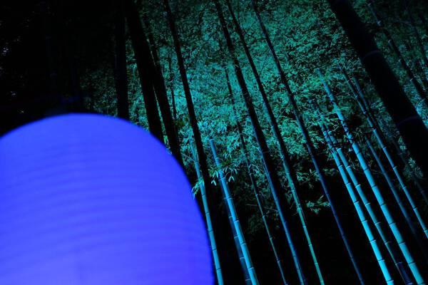 glow in the bamboo grove