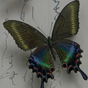 甲虫類・昆虫類