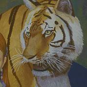 tiger(tiger)